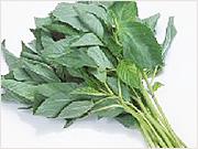 モロヘイヤビタミンC、ビタミンE、β-カロチン、全てが充分揃った 夏野菜の王様です!