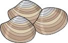 材料(2人分)あさり(殻つき) 250g白菜 120g酒 大さじ 1強三つ葉 6g
