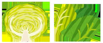 ●春キャベツ● 「春キャベツ」は、暖かい春の日差しを浴びて育っているため、葉がしなやかで鮮やかな緑色をしています。特に外葉は緑色が濃く、内葉は黄緑色です。葉の巻きが「ゆるやか」なのも特徴です。味はみずみずしく、やわらかくて甘みもあるので、サラダなどの生食がおすすめです。炒めものや煮物などの加熱調理をする場合は、火が通りやすいので、手早く短時間で済ませるようにしましょう。クセがないので、和風のサラダにもおすすめです。